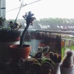 Dagboekfragment – Herfst