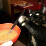 2015 to do pagina + lulverhaal + random kattenfoto's om deze post wat dragelijker te maken